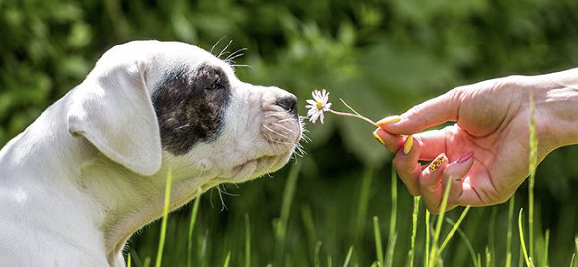 hay fever in dogs